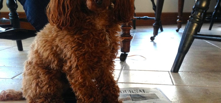 Dog Newspaper Problem